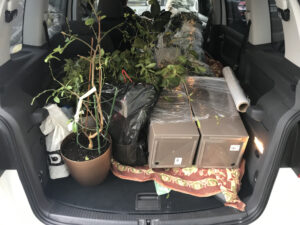 Что требуется при переезде с комнатными растениями в зимний период